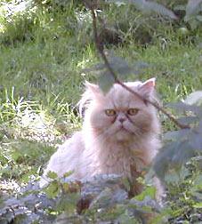 2007-06-25nachbarskatz.jpg