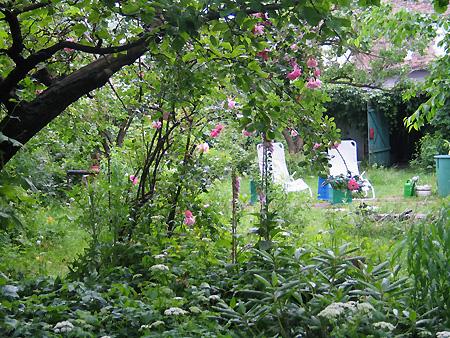 Blick in den wilden Garten
