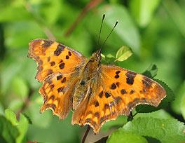 mit Makro fotografierter Schmetterling