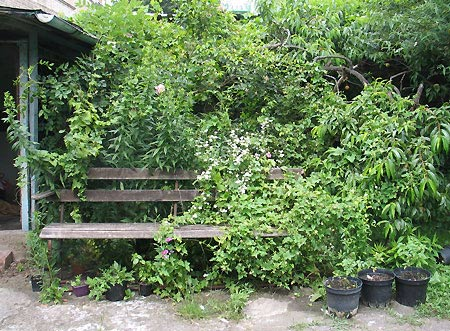 Gartenbank mit Zaunrübe