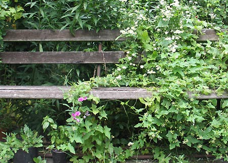 Gartenbank mit Schlingpflanze