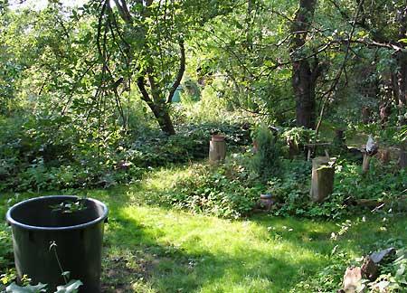 wilder Garten im August 2007