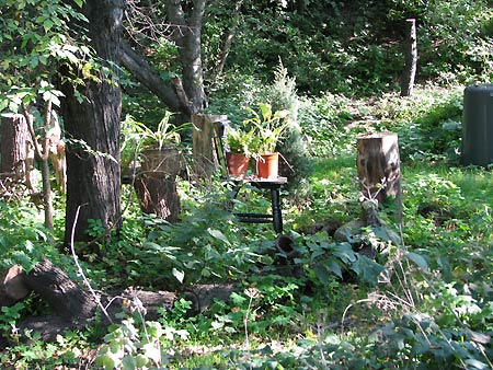 Garten im Hebst