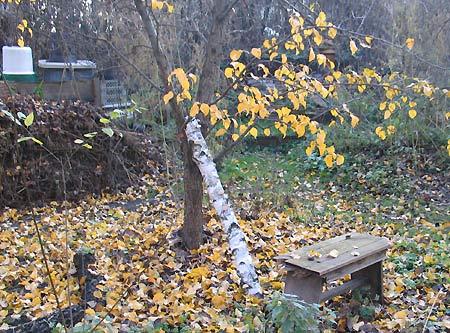 Komposthaufen Dezember 2006