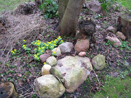 Erde, Steine, Pflanzen