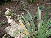 Beet mit Steinen und mediterranen Pflanzen