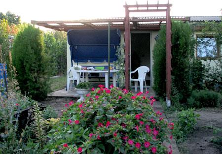 Wunderblume im August 2008