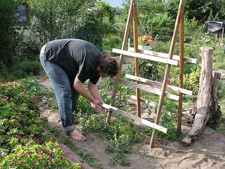 Tomatenkletterhilfe kommt weg