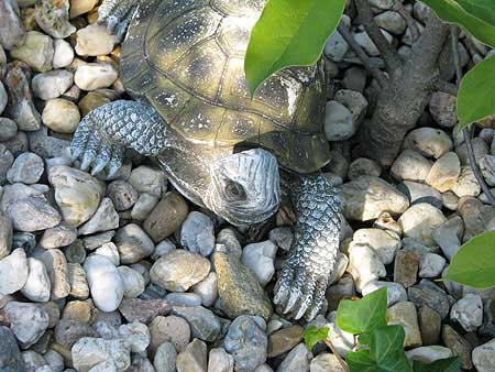 Kiesbeet mit Schildkröte