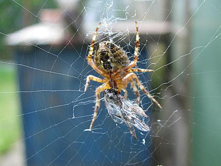 Spinnes Abendessen