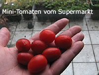 Mini-Tomaten