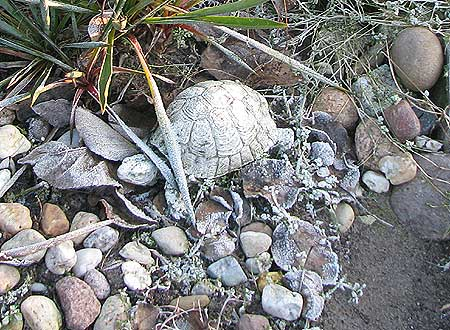 Gartenobjekt Schildkröte