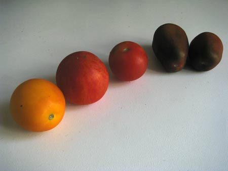 3 alte Tomatensorgen