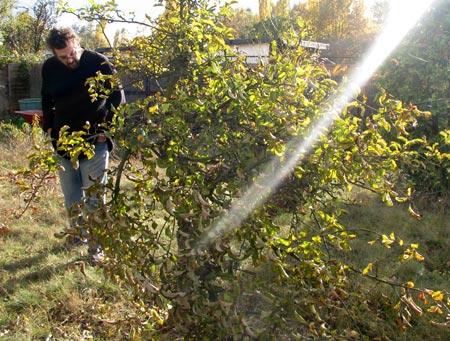 Matthias und der schwer verletzte Apfelbaum