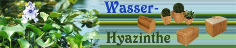 wasserhyazinthe