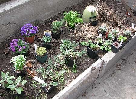 23 neue Pflanzen