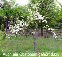 auch ein Apfelbaum gehört zur kleingärtnerischen Nutzung