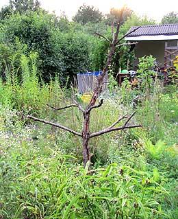 Skelett vom toten Pfirsichbaum