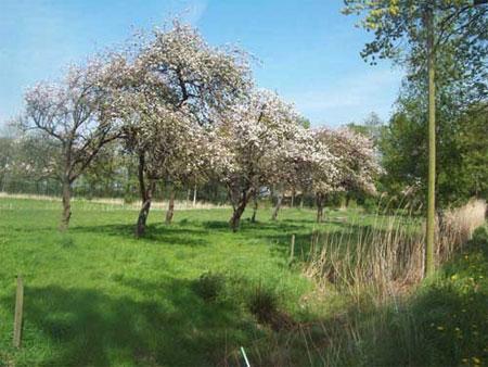 die gefährdeten Obstbäume