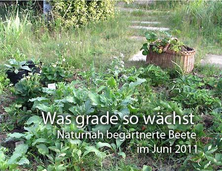 Diashow aus Gartenfotos im Juni 2011