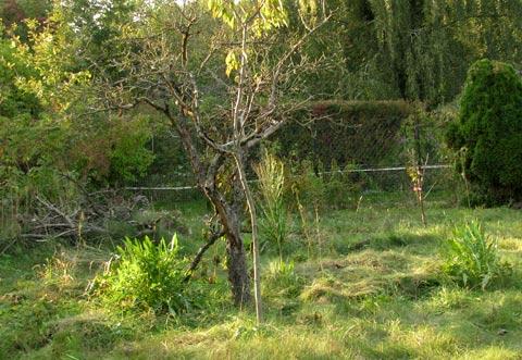 Das Terra-Preta-Beet im Herbst