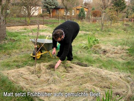 Matt setzt Frühblüher aufs gemulchte Beet