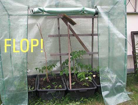 Fabulous Gesucht: das optimale Tomatendach! › Das wilde Gartenblog HF62