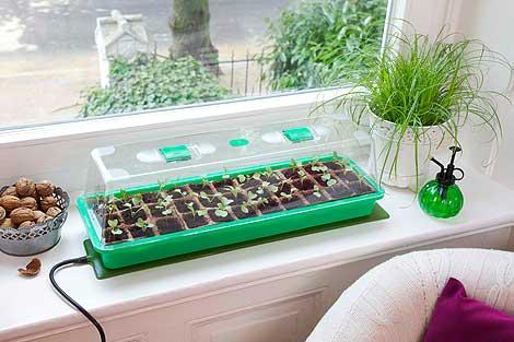 tomaten vorziehen tomaten vorziehen auf der fensterbank so geht es tomaten vorziehen auf der. Black Bedroom Furniture Sets. Home Design Ideas