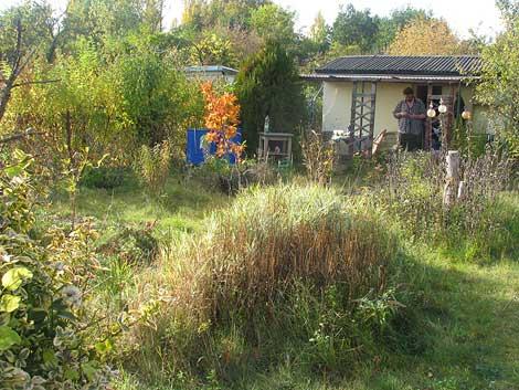 Die Mispel als farbiges Highlight im Garten