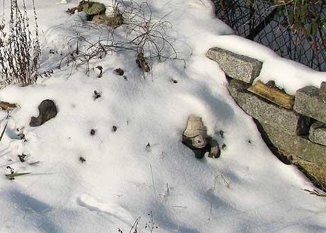 Schildkröte im Steinbeet