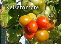 Reisetomate CC Henry Steinbock tomatl.net