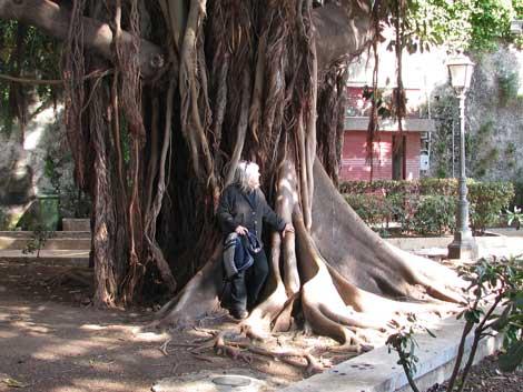 tropischer Riesenbaum