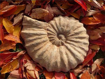 Gartenkunst: Ammonit
