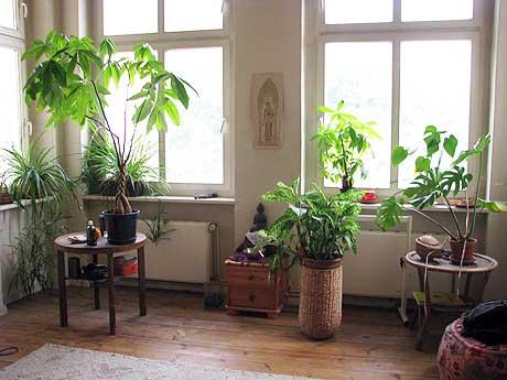 Pflanzen am Fenster
