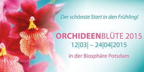 Orchideenbanner