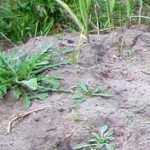 sandiger Boden