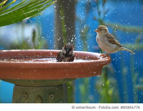 Untersetzer als Vogelbad