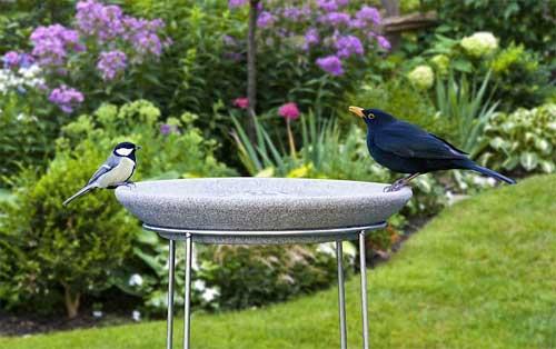 Vogeltränke mit Ständer