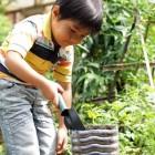 Junge gärtnert