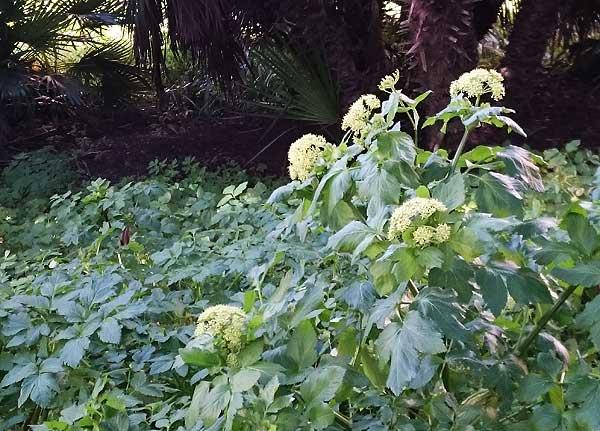 unbekannte Pflanze im Part