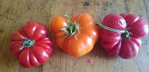 Drei Tomaten