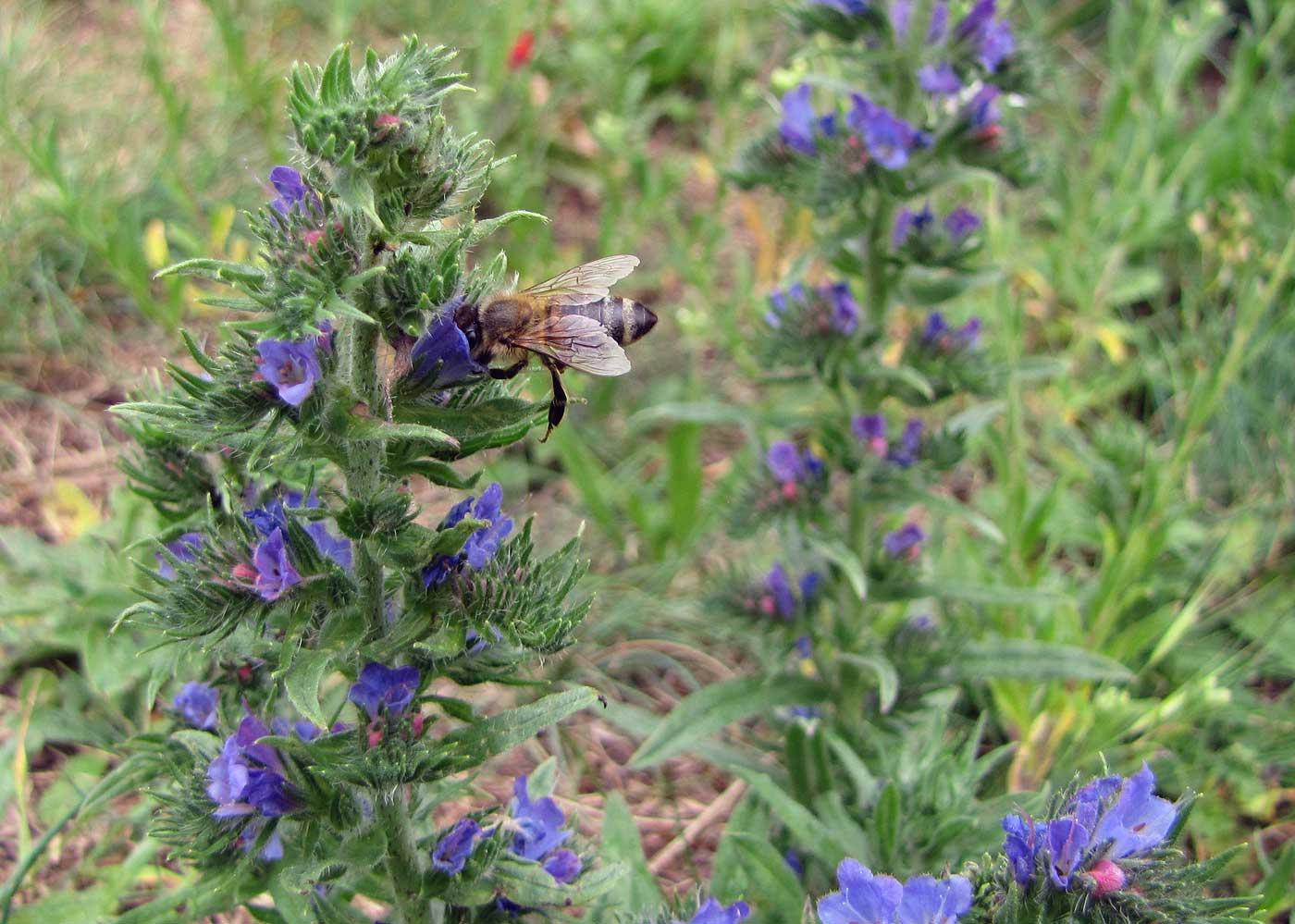 Insekten fotografieren: die halten selten still!