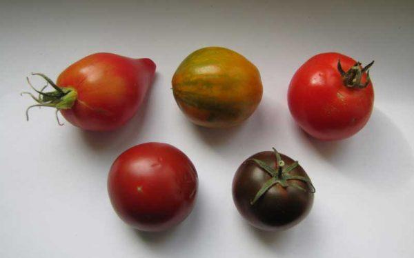 Tomaten 2019