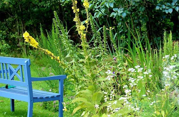 Gartenbank mit wildem Beet