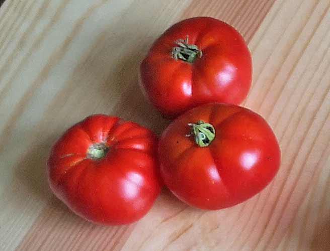 Kotzula rote 'Tomate