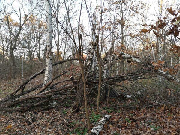 kaputte Bäume