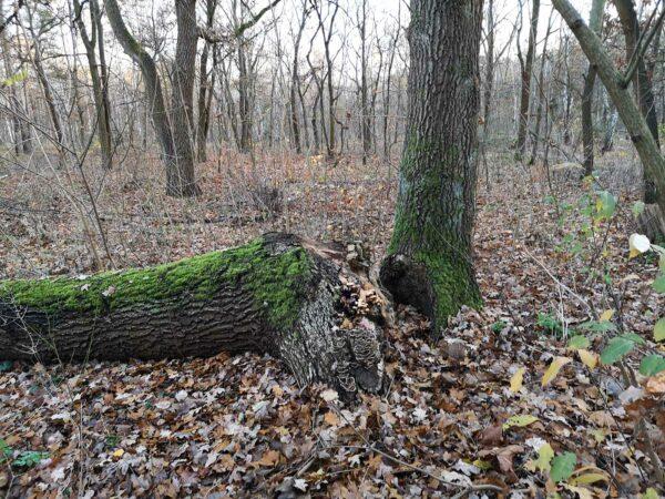 kaputter Baum