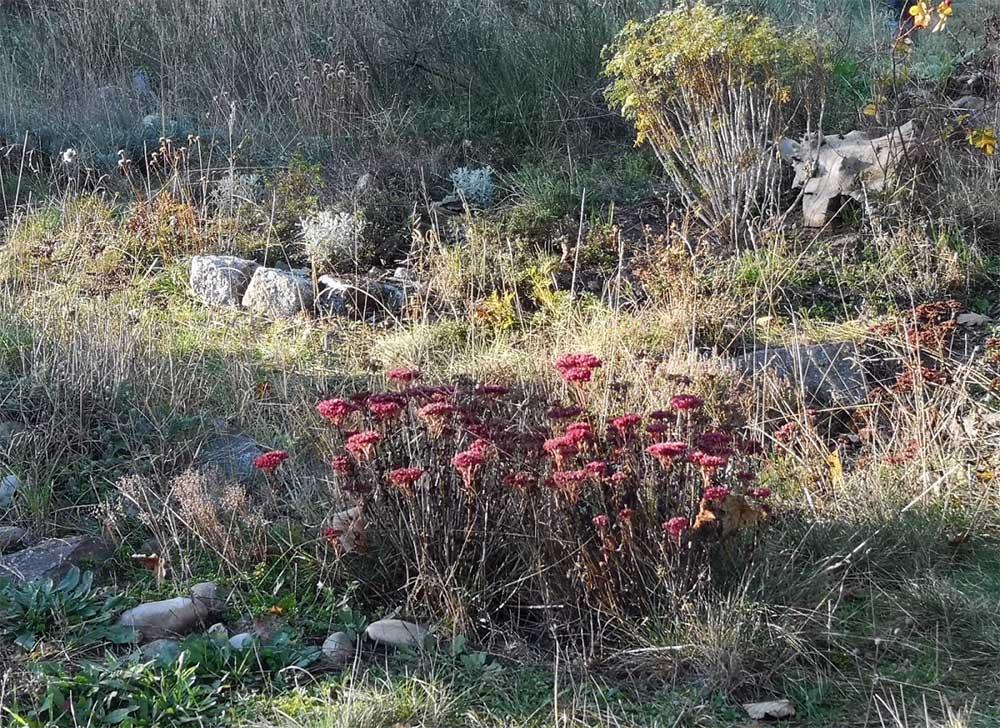 Wilder Garten im November
