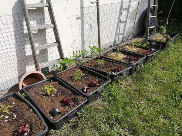 Bautuppen mit Tomaten und Salat