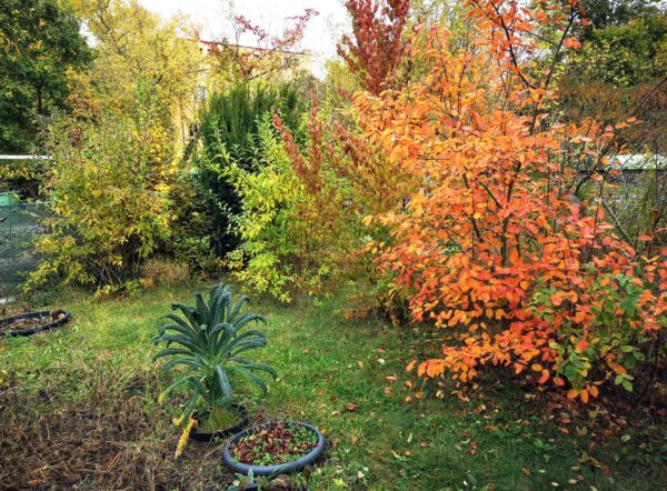 Der wilde Garten: Oktober 2021